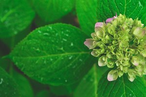 young flower in summer garden