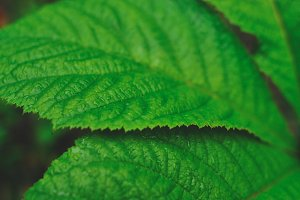 Flower fresh leaf close-up