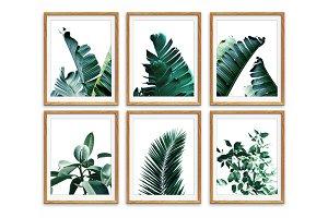 Set of 6 Wall Art, Leaf Prints