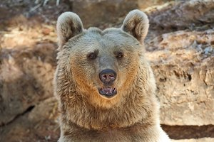 Big Bear posing for visitorsi in Tel