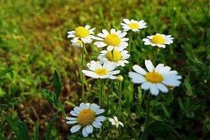 Wildflowers on the rural field lawn