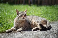 Tabby female cat resting outdoors