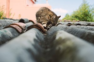 Cat on a roof outdoors.