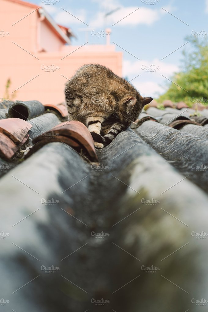 Cat on a roof outdoors. - Animals