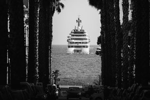 Palm tree and luxury yacht