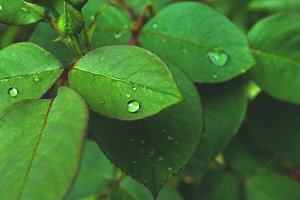 a drop of dew on the leaves