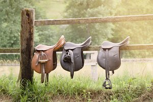 Three leather saddles in a wooden fe