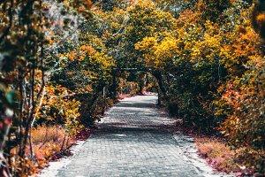 Pictorial walkway in subtropics