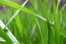 Green grass and water droplets.