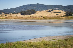 Wetland bird refuge