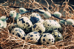 Quail eggs in a nest of straw and tw