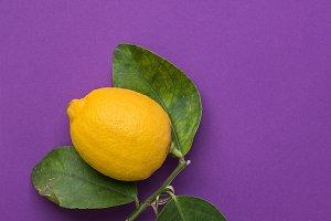 Bright Yellow Lemon on Purple