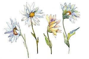 Fine white daisy PNG watercolor set