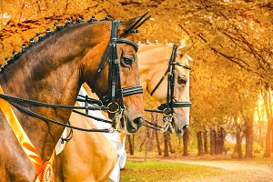 Two horses portrait in autumn park