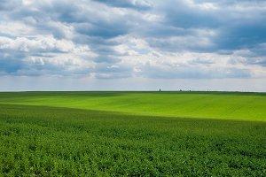 Green meadow 1