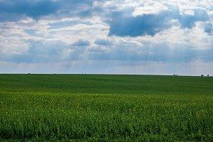 Green meadow 2