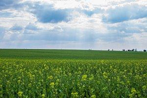 Green meadow 3