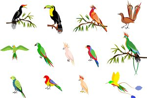 Vector set of tropical birds