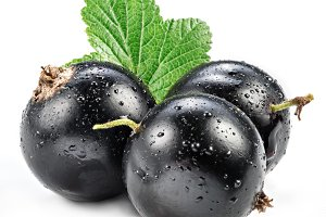 Black currant with water drops on th