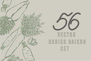 Radish daikon, vector