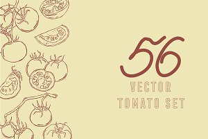 Tomatoes, vector