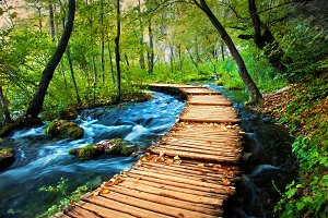 Deep forest stream, Croatia