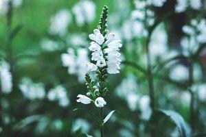 fresh summer white flower