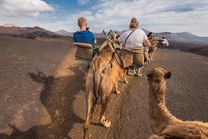 tourist riding Camels