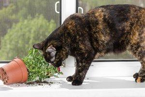 Cat dropped flower pot
