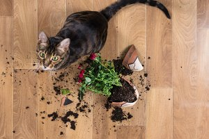 Cat dropped and broke flower pot