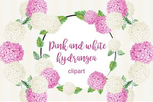 Pink and white hydrangea clipart