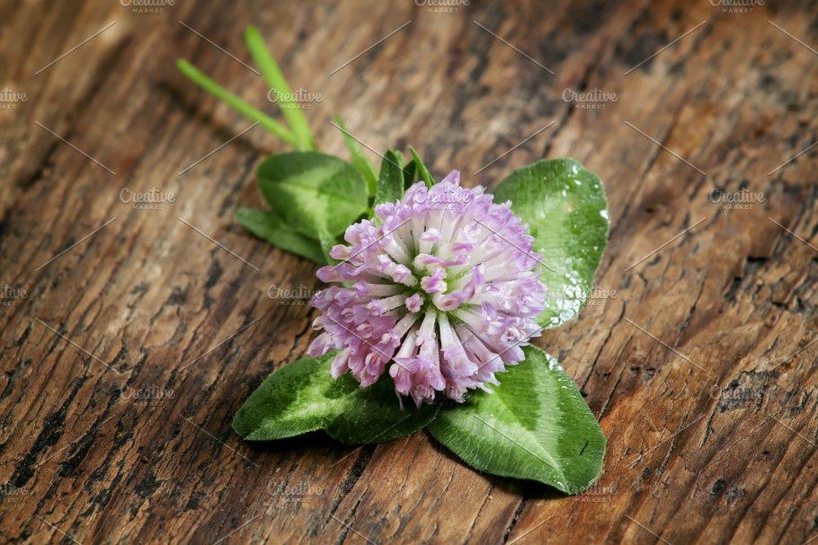 Flower Purple Clover Shamrock With Nature Photos Creative Market