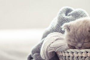 kitten in the basket
