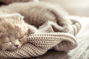 kitten sleeps on a sweater