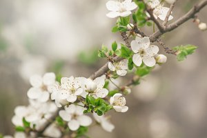 Spring blurred natural background wi