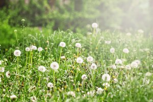 Defocused spring natural green backg