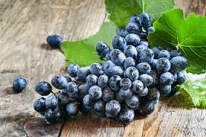 Fresh wet dark blue grapes with leav