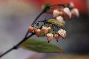 Bell Plants Orange