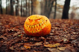 Halloween scary pumpkin in autumn fo
