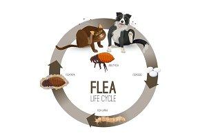 Flea life cycle circle with