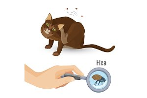 Flea from cat fur harmful bio