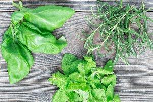 Basil, mint, rosemary. Fresh green h
