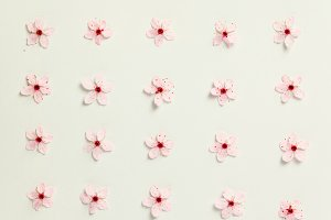 Floral pattern of cherry flowers