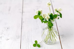 white clover in a glass jug on table