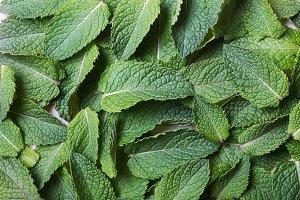 Mint leaves flat lay