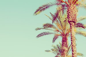 Row of Tall Palm Trees on Toned Ligh