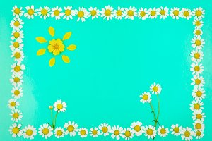 Frame with flowers and sun of daisie