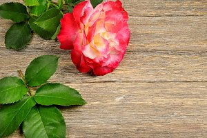 Red rose on wooden background.