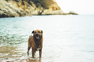 Big dog is swimming in the sea