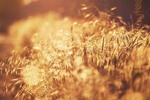 Summer background, landscape at suns